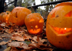 The annual Parks Pumpkin Festival is in Central Park this Saturday.