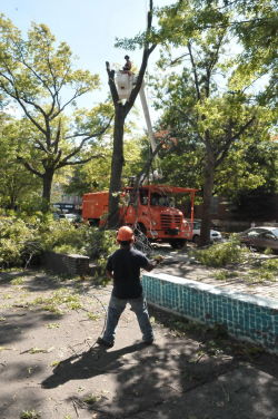 September storm cleanup in Brooklyn's Washington Park.