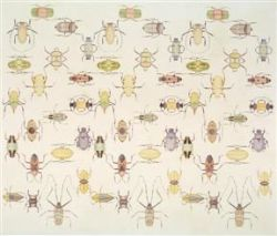 Ben Snead, Beetle Frequency, 2000, Oil paint on linen; 64 x 74 inches,