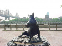 Image of Boar
