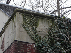Image of Baboon and Mandrill