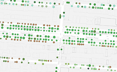 NYC Street Tree Map