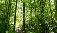 Care for a State Park's Forest
