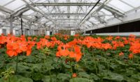 Queens Greenhouse                                                Open House