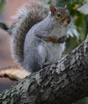 Squirrels in NYC's Parks
