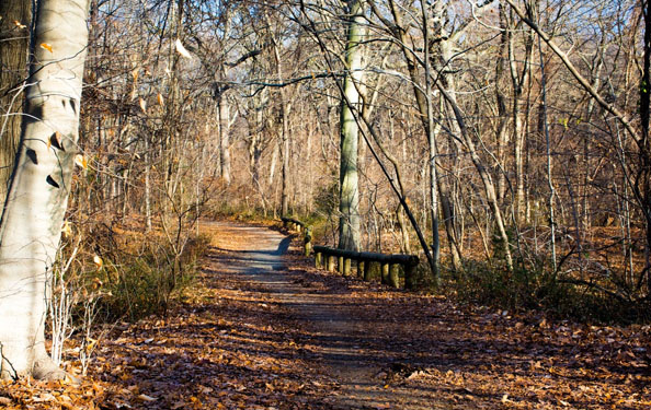 a nature trail winds along a tree path leading deeper into the winter woods