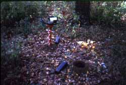 Photograph of debris in a Parks forest, link to enlarged image