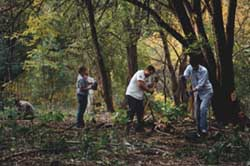 Photograph of a forest restoration team, link to enlarged image