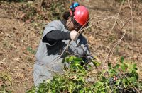 Parks Opportunity Program worker breaking branches