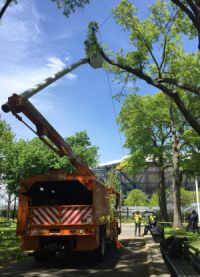 A tree pruning taking place in Flushing Meadows Corona Park