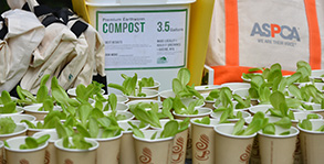 Compost - sustainability in the gardens