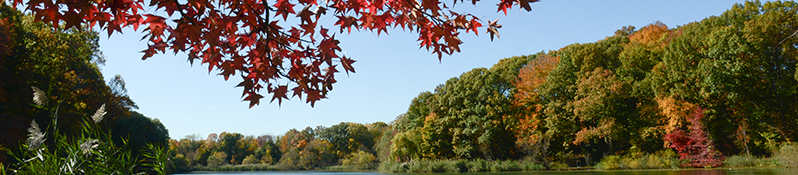 fall foliage at Oakland Lake in Alley Pond Park