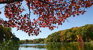 fall foliage at Alley Pond Park, Queens