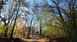 fall foliage in Central Park, Manhattan