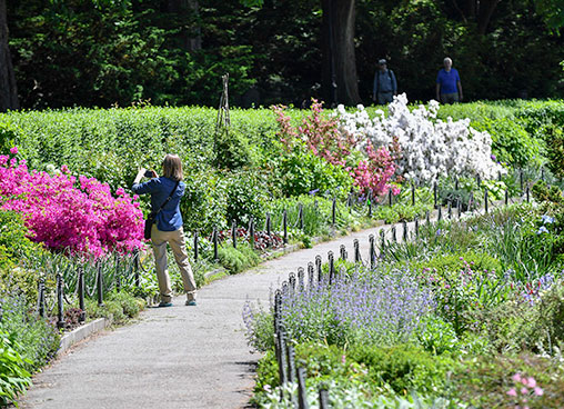 A park guests stops to take a photo of flowers in bloom along a park path
