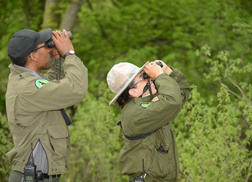 Park rangers use telescopes to look for wildlife in the trees