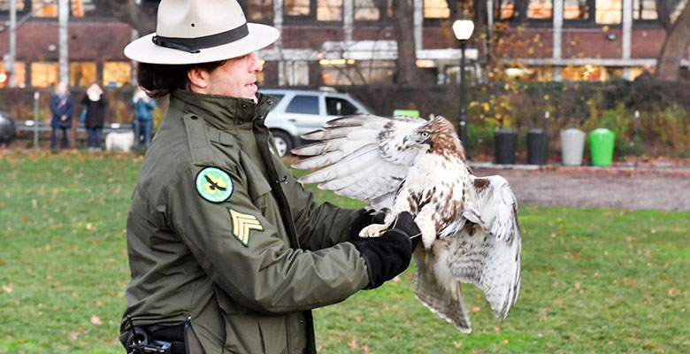 A park ranger holds on to a hawk
