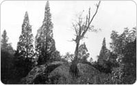 Image of 1911 Shot of Split Rock Road in Pelham Bay Park, Site of Anne Hutchinson's Death