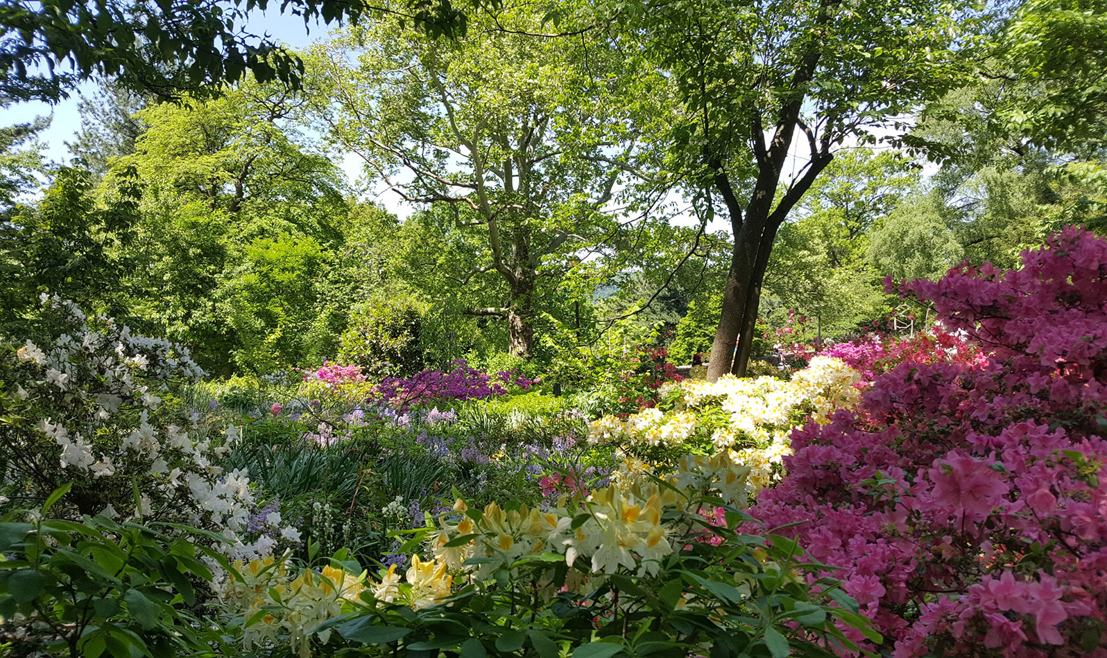 The Heather Garden is New York City's largest garden with unrestricted public access. Visit this breathtaking display of plants and flowers in the summertime.