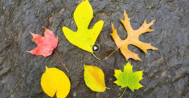 Link to know your fall colors video guide.
