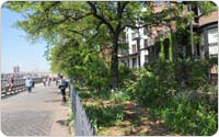 <em>Brooklyn Heights Promenade</em>, 2010, Photo by Daniel Avila/New York City Department of Parks and Recreation