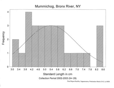 Mummichog length frequency analysis