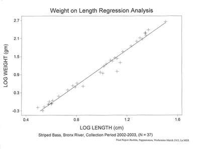 Striped bass weight on length regression