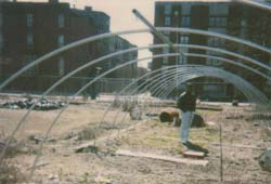 Hattie Carthan Community Garden before community gardeners had finished its transformation. Courtesy of GreenThumb.