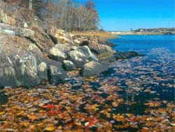 Autumn leaves in the water next to rock outcrop on shoreline