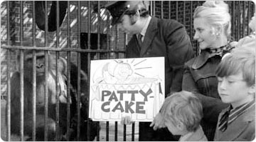 Mother gorilla Lulu observes the zookeeper displaying naming signage for her baby Patty Cake, Central Park Zoo, October 1972. Photo: Daniel McPartlin