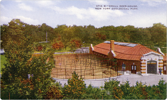 A postcard image of the small deer house at the Bronx Zoo, circa 1915, published by the New York Zoological Society.