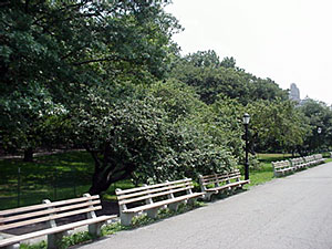 image of walk and benches