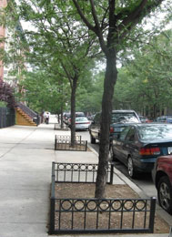 Tree Guards Nyc Parks