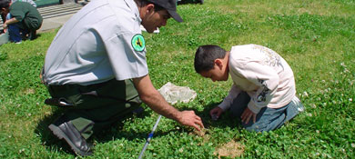 Ranger showing a boy insects
