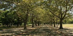 Path surrounded with trees in Flushing Meadows Corona Park