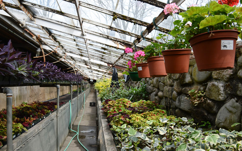 Admirable Tour The Forest Park Greenhouse Nyc Parks Home Interior And Landscaping Oversignezvosmurscom