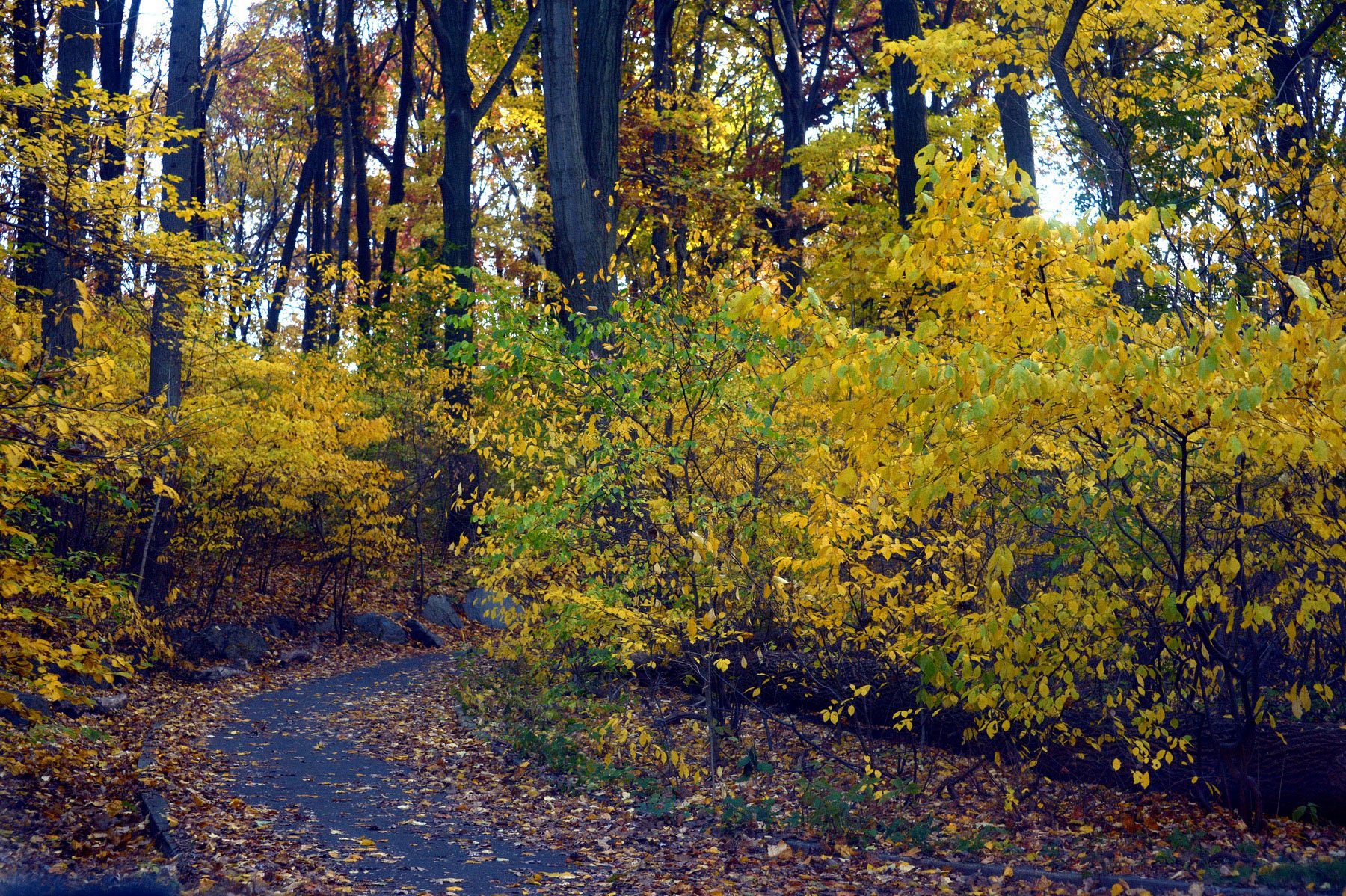 5 Hiking Trails In New York City To Check Out This Fall