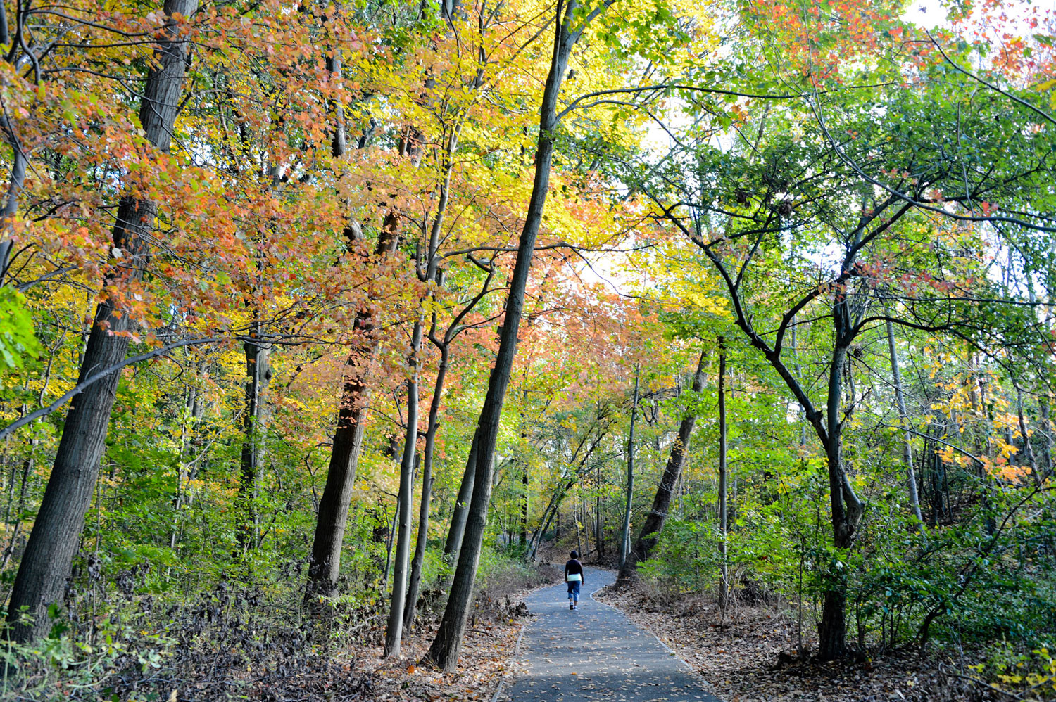 Fall Foliage in Parks : NYC Parks