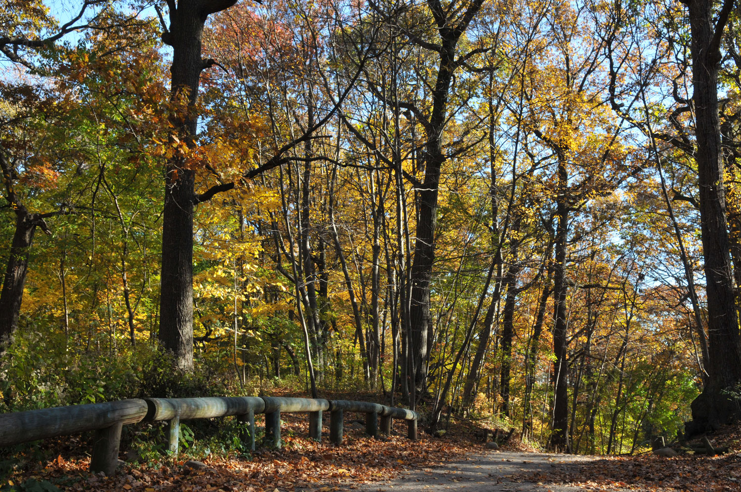 Fall Foliage In Parks Nyc Parks