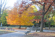 Fall Foliage in Prospect Park
