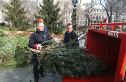 Mayor Michael R. Bloomberg and Parks Commissioner Adrian Benepe feed a tree into the chipper at MulchFest 2009