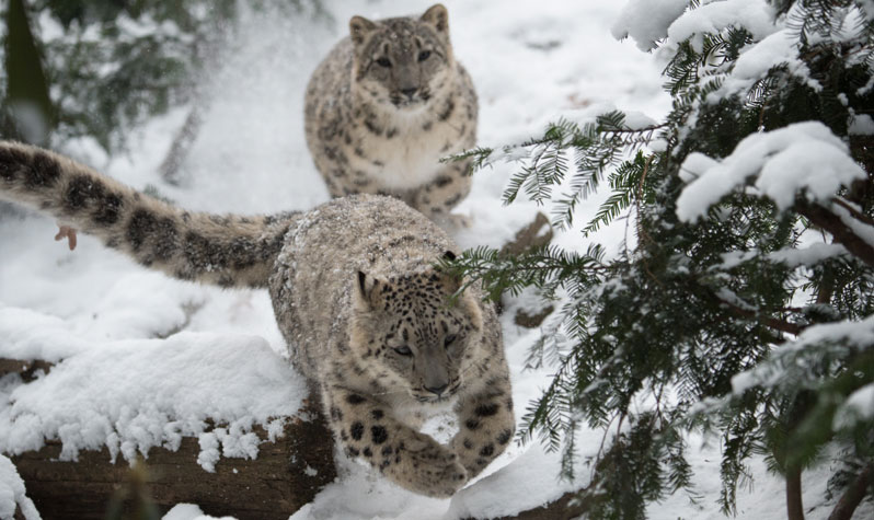 Image result for winter zoo