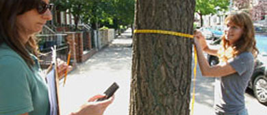 Tree Troubles — Predicting Sidewalk Damage Resulting From Trees In NYC