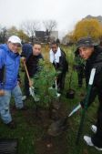 MillionTreesNYC Fall Volunteer Planting Day