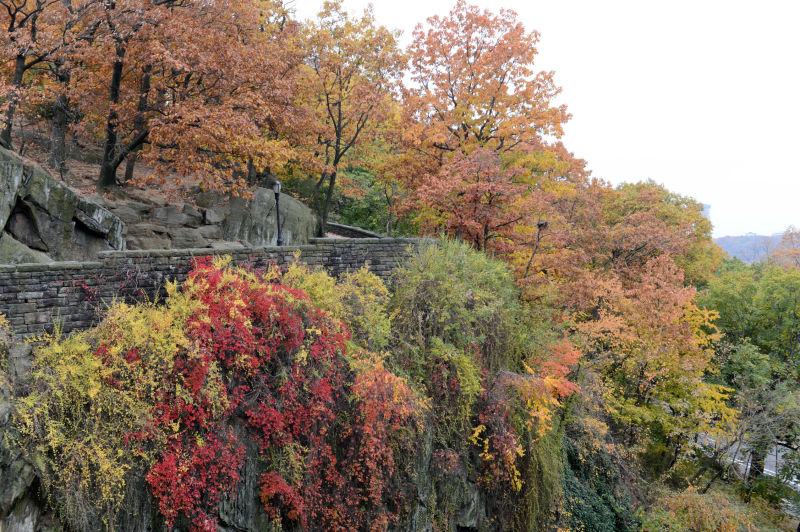 Fort Tryon Park : NYC Parks nature in nyc
