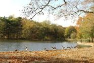 Prospect Park in Fall
