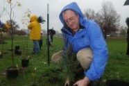 Parks First Deputy Commissioner Liam Kavanagh plants a tree