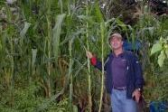 Commissioner Benepe inspects the garden's impressive corn stalks