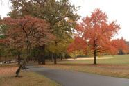 Fall in Parks