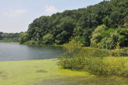 Restoration of Oakland Lake